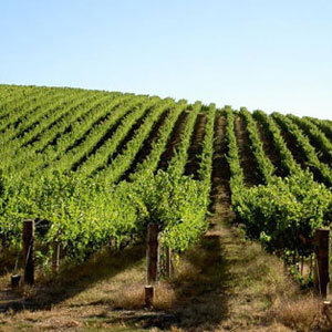 Barossa Travel 1