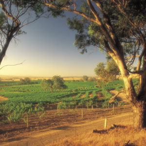Barossa Travel 2