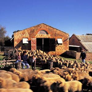 Clare Valley Travel 1