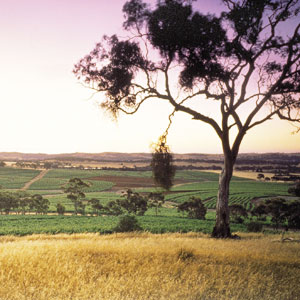 Clare Valley Travel 2