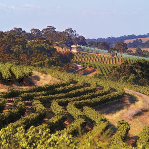 Clare Valley Travel 5