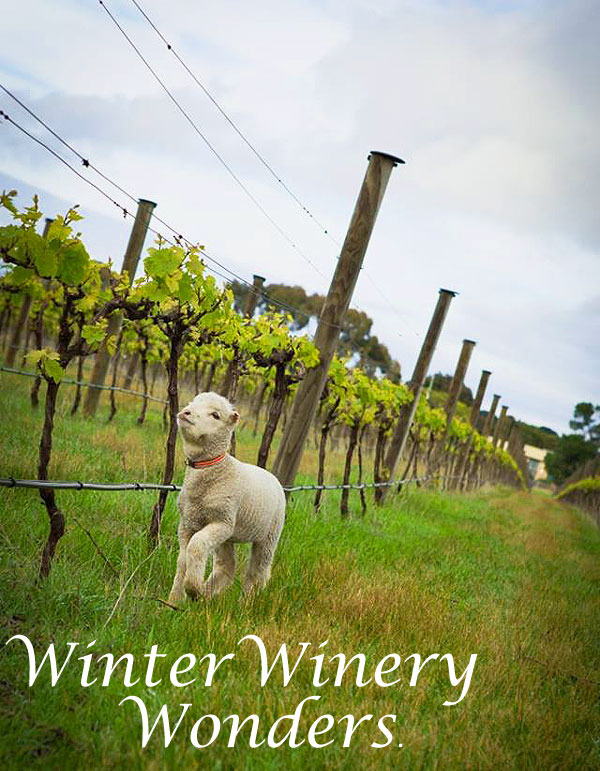 Winter Winery Wonders