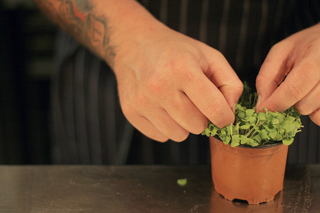 A Quick Chat with a Chef Hatted Chef