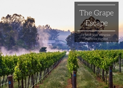 The Grape Escape: Must Visit Wineries this Wine Harvest