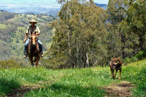 Horse Riding in New South Wales