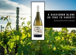 A Sauvignon Blanc so True to Variety