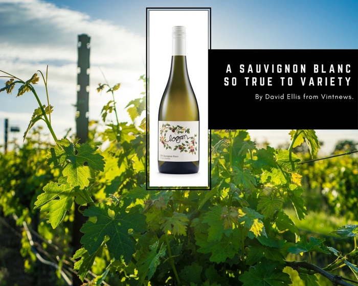 A Sauvignon Blanc so True to Variety