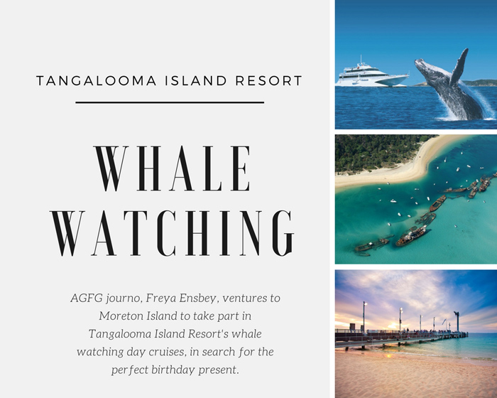 The Perfect Gift: Whale Watching with Tangalooma Island Resort