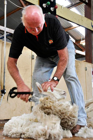 Kangaroo Island's Shear Fun Event