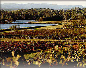 Australian Wine Harvest