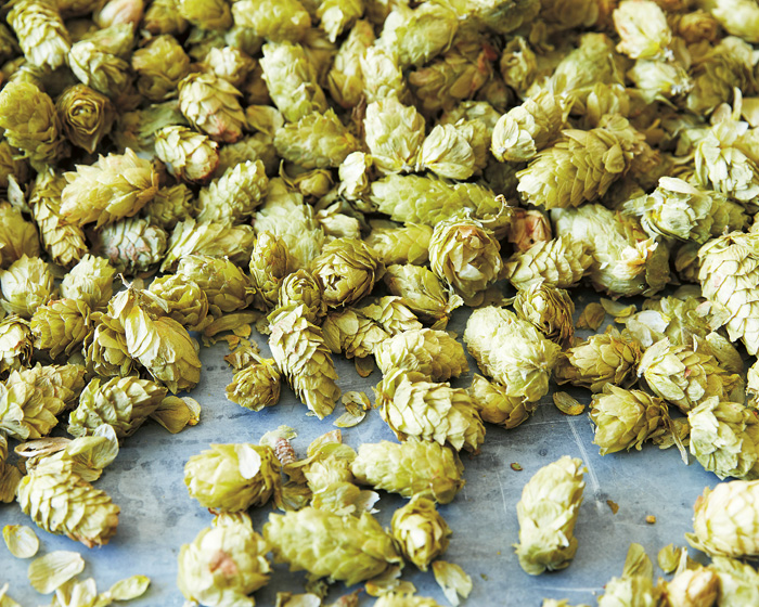 Go On, Brew a Batch this Christmas: 5 Tips for First Timers