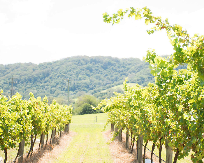 9 of our Favourite Winery Haunts