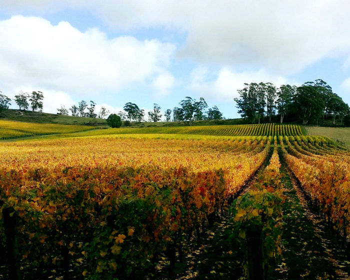 7 of our Favourite Wineries to take Mum for Mother's Day