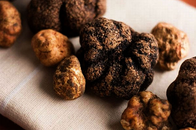 Growing Mushroom Trends & Truffles