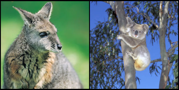 Wildlife in South Australia