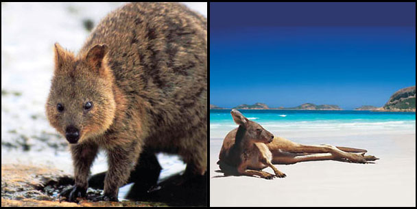 Wildlife in Western Australia