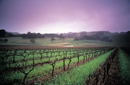 Wineries in Victoria