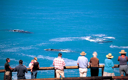 Whale Watching in South Australia