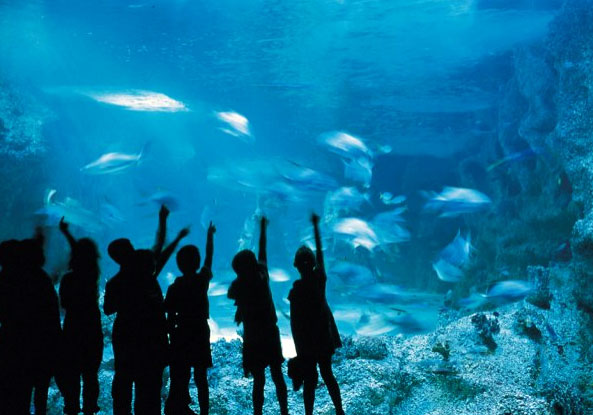 Aquariums around Australia