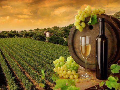 Summery Spanish Wines