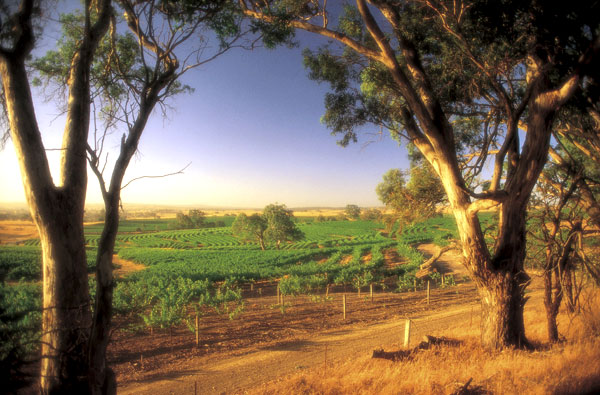 Wineries in South Australia
