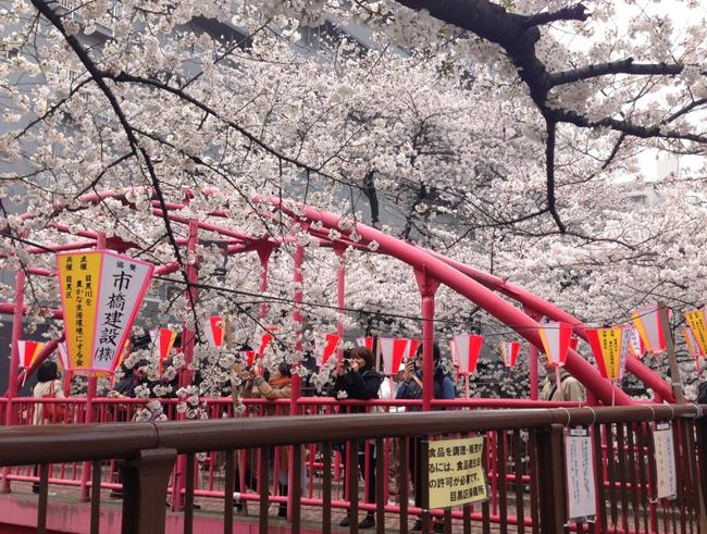Sakura Festival - A forever blossoming culture