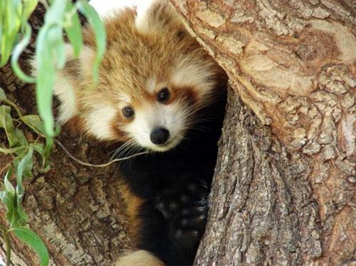 Zoos & Sanctuaries in the ACT