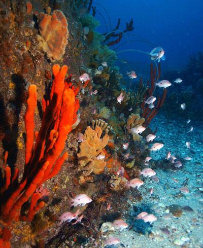 Diving & Snorkelling in Tasmania
