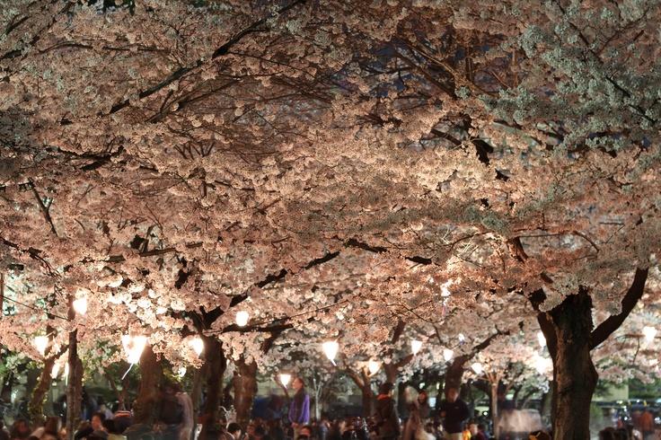 Sakura Festival 2015