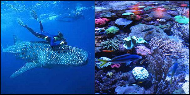 Diving & Snorkelling in Western Australia