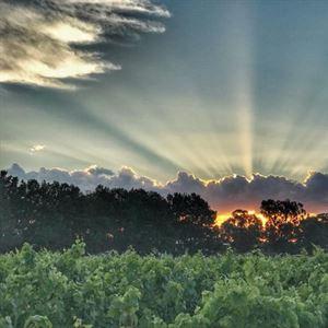 Summit Estate Wines