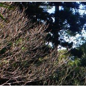 Turkey's Nest Rainforest Accomodation