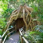 Glow Worm Caves Mt Tamborine