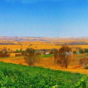 Lindsays Woodonga Hill
