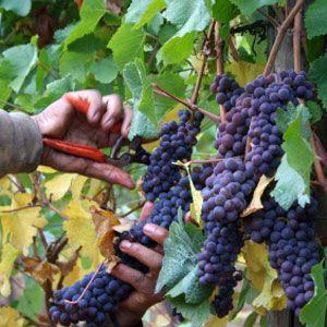 Echuca Moama Wine Tours