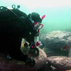 Diving on the NSW Central Coast