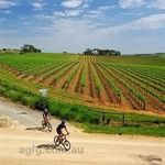 Cycling Trails in Clare Valley