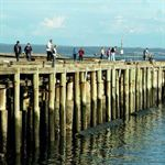 Fishing in Devonport and The Northwest