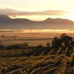 Wine Tours in the Grampians & The Pyrenees