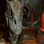 National Dinosaur Museum