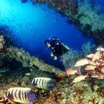 Wheeler Reef Dive Site