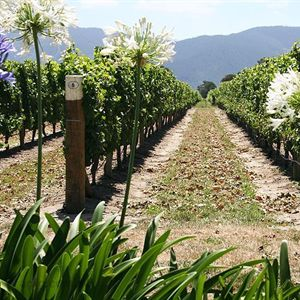 Mt Tamborine Wine Tasting Tours