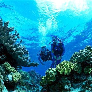 Fitzroy Reef