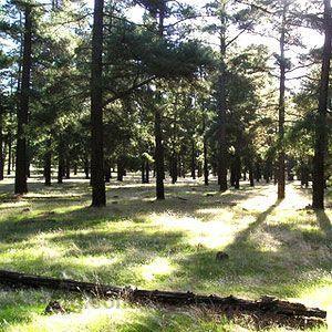 Bundaleer Forest