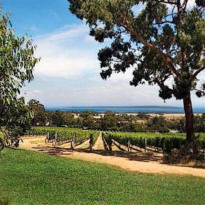 Gippsland Wine Region