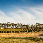Glenmore Wines Yallingup