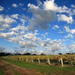 Wignalls Wine