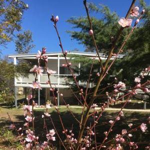 Glen Aplin Gardens