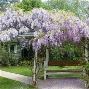 Amelina Cottages
