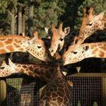 Western Plains Zoo
